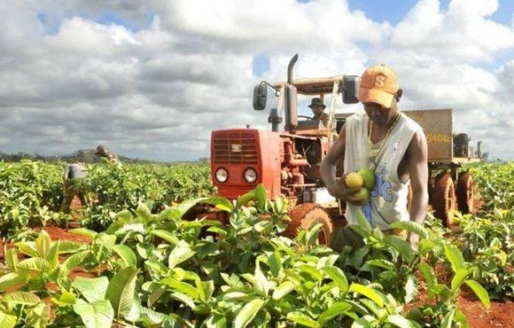 Cuba denuncia freno agrícola por bloqueo impuesto por EE.UU. | Noticias |  teleSUR