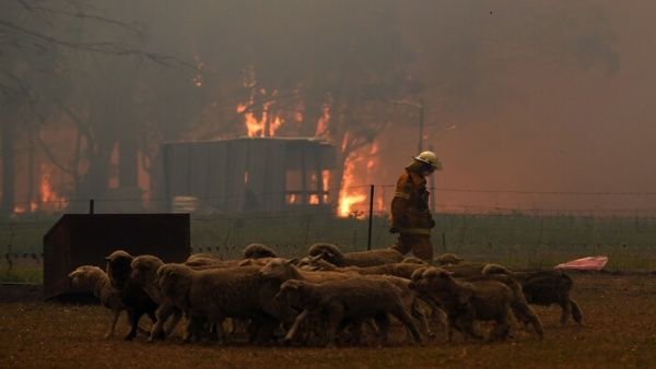 Los especialistas alertaron que varios animales han muerto en los incendios, mientras otros sobreviven para quedarse sin sus respectivos hábitat.