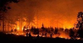 Se encuentran combatiendo este incendio cerca de 36 brigadas, 31 aeronaves y equipos del ejército chileno, la armada y los bomberos.