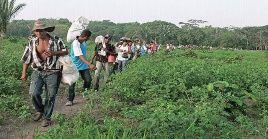 Los campesinos denuncian el olvido del Estado en la región a pesar de los enfrentamientos en el Cauca.