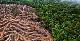 La deforestación ha generado cambios en el ecosistema que afectan la salud de la humanidad.