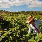 Sin agricultura familiar no sobreviviremos a ninguna pandemia
