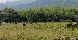 La represión tuvo lugar en medio de una operación de desalojo y erradicación de cultivos.