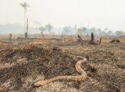Brasil cancela acciones contra la deforestación en la Amazonía
