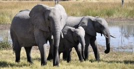 El bosque Pandamasue, en el oeste de Zimbabue, es la mayor reserva protegida del país africano.