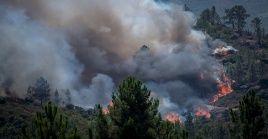 Durante el actual año ha habido la menor cantidad de incendios forestales que se han presentado en el país durante la última década.