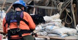 Un perro especializado del grupo de rescatistas Topos de Chile descubrió posibles sobrevivientes.