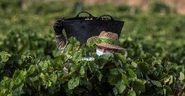 La pandemia y las medidas de contención han provocado escasez de mano de obra y pérdidas de cosechas, entre otros efectos negativos.