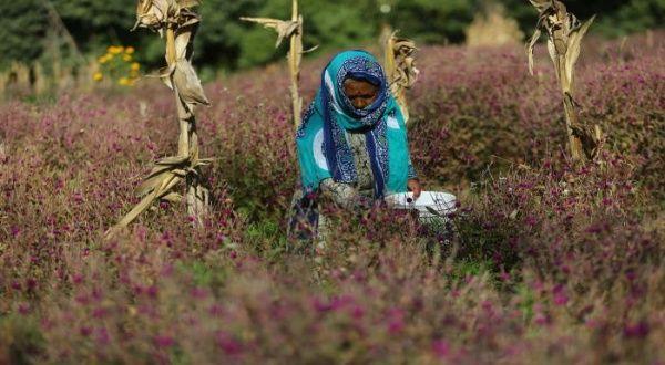 Ecuador registra tasa de desempleo del 8% para las mujeres
