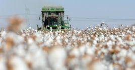 Las exportaciones de productos de algodón han sido objeto de medidas coercitivas unilaterales por parte de EE.UU.