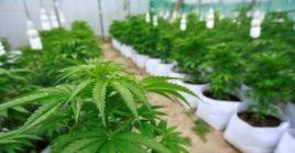 La iniciativa supone la remoción de la planta de la lista de las sustancias bajo control, así como la eliminación de ciertas condenas vinculadas con su uso.