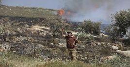 Según el Ministerio de Agricultura palestino, las autoridades israelíes arrancaron 1.000 semilleros de plantes cerca de la ciudad de Tubas.