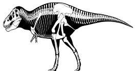 El grupo experto descubrió que alrededor de 20.000 individuos, Tyrannosaurus Rex vivieron durante 127.000 generaciones