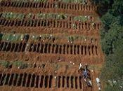 Genocidio en Brasil y sus datos