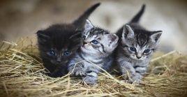 Los gatos están entre los animales domésticos de más antiguo registro histórico.