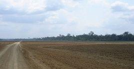 En comparación con agosto del 2020, el área deforestada de la Amazonía en 2021 es un 7 por ciento mayor.
