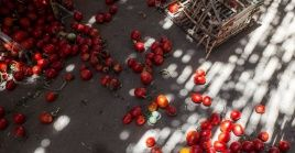 Según la FAO, más de 900 millones de personas no tienen garantía de alimentación, pese al alto nivel de desperdicio de comida.