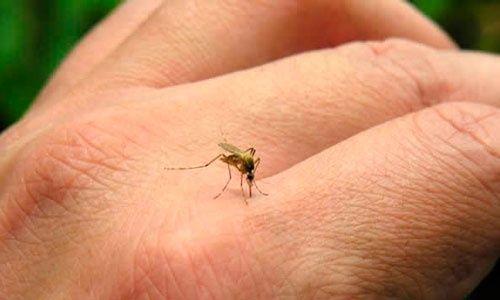 Aprende a distinguir las diferencias entre el dengue y el chikungunya