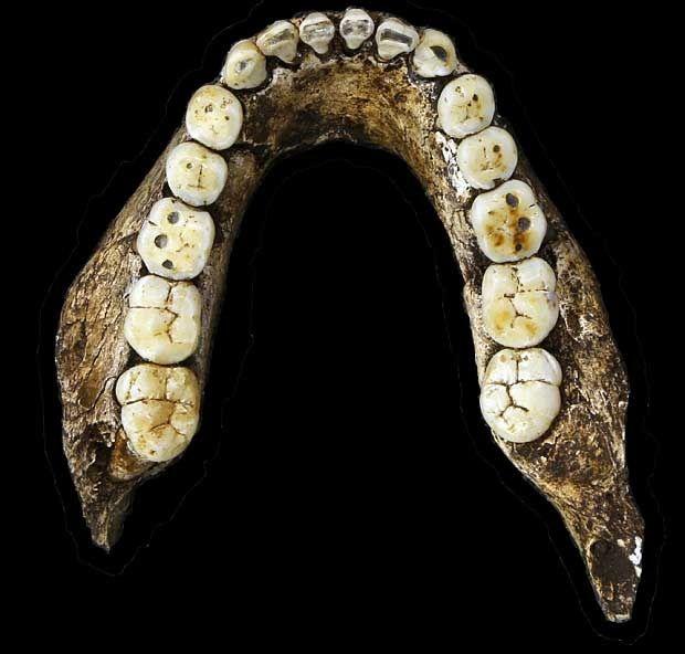Cient ficos descubren nuevo ancestro del ser humano for Pececillo nuevo de cualquier especie