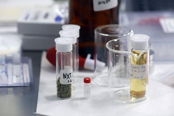 latinoamérica-avanza-en-el-uso-de-cannabis-medicinal